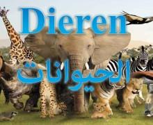 أسماء الحيوانات باللغة الهولندية
