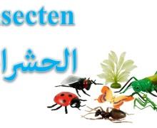 أسماء الحشرات باللغة الهولندية De insecten