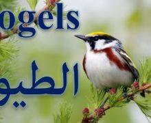 الطيور بالهولندي De vogels